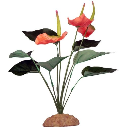 Komodo Anthurium Bush 29cm